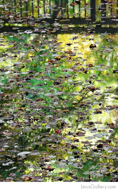 reflecting artist calls anderson Reflections Artist Kelly Anderson | Reflections On Water With Leaves